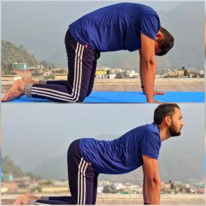 yoga asana for back pain  the spiritual oxygen